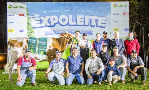 Arapoti sedia a principal feira de pecuária de leite da região