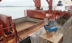Desembarque de cereais pelo Porto de Paranaguá cresce 31%