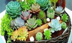 O guia da suculenta: conheça as espécies e como cultivá-las
