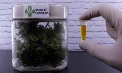 Comissão debate com especialistas em saúde pública uso de medicamentos feitos com cannabis