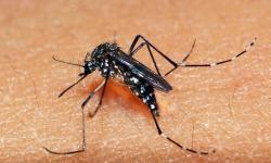 Paraná registra 104 novos casos de dengue em uma semana