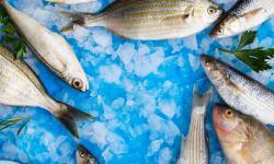 Cuidados para conservar alimentos devem ser redobrados no verão