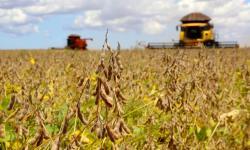 Paraná estima safra de grãos acima de 40 milhões de toneladas