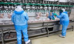 Saúde adota medidas de prevenção e controle em frigoríficos