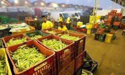 Ceasa Curitiba licitará áreas para seu mercado atacadista