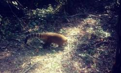 Paraná vai ampliar atendimento à fauna vítima de tráfico e maus-tratos