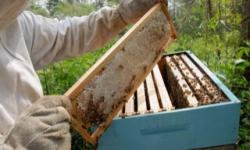 Paraná lidera produção de mel com crescimento de 14,6%