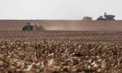 Boletim registra encerramento de plantio de várias culturas