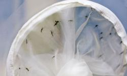 Estado do Rio registra duas mortes por chikungunya em 2019