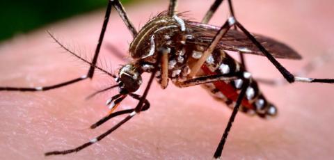Paraná inicia novo ciclo de monitoramento da dengue