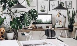 Costela-de-adão: planta com folhagem exuberante é fácil de cuidar