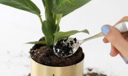 Café faz bem para as plantas? Saiba como ele age no solo