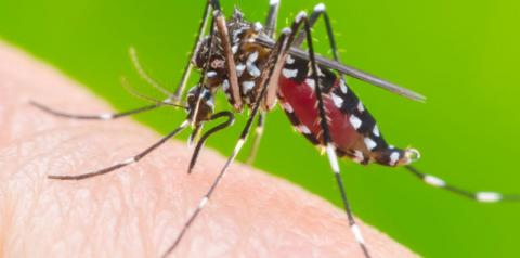 Ações de combate à dengue são reforçadas em todo o Estado