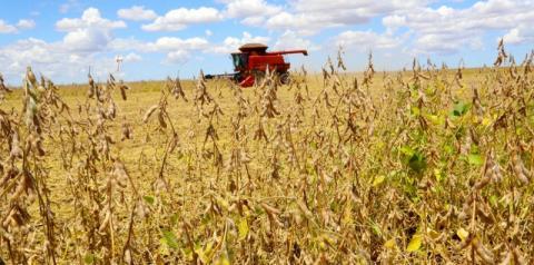 Paraná deverá produzir 40 milhões de toneladas de grãos