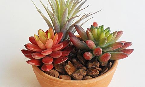 Suculentas em vasos: 19 ideias de decoração dentro de casa e no jardim