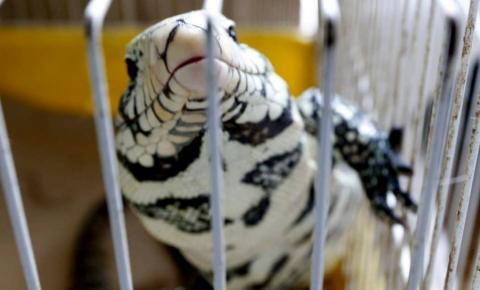 Polícia resgata cerca de 70 animais silvestres em clínica de Curitiba