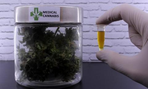 Câmara debate com autoridades estrangeiras uso medicinal do canabidiol