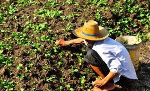 Fundo Garantidor Solidário deve agilizar financiamento rural