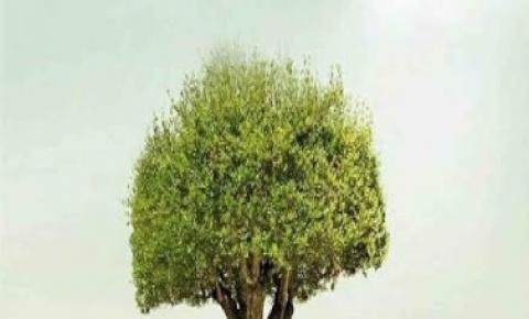 Dia da Árvore terá plantio de 550 mil mudas em todo Estado