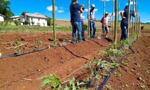 IDR-Paraná usa a internet para capacitação em agricultura orgânica