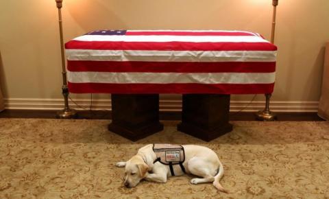Cão de George H.W. Bush aparece deitado ao lado de caixão do ex-presidente