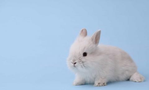 China anuncia que não fará mais testes em animais